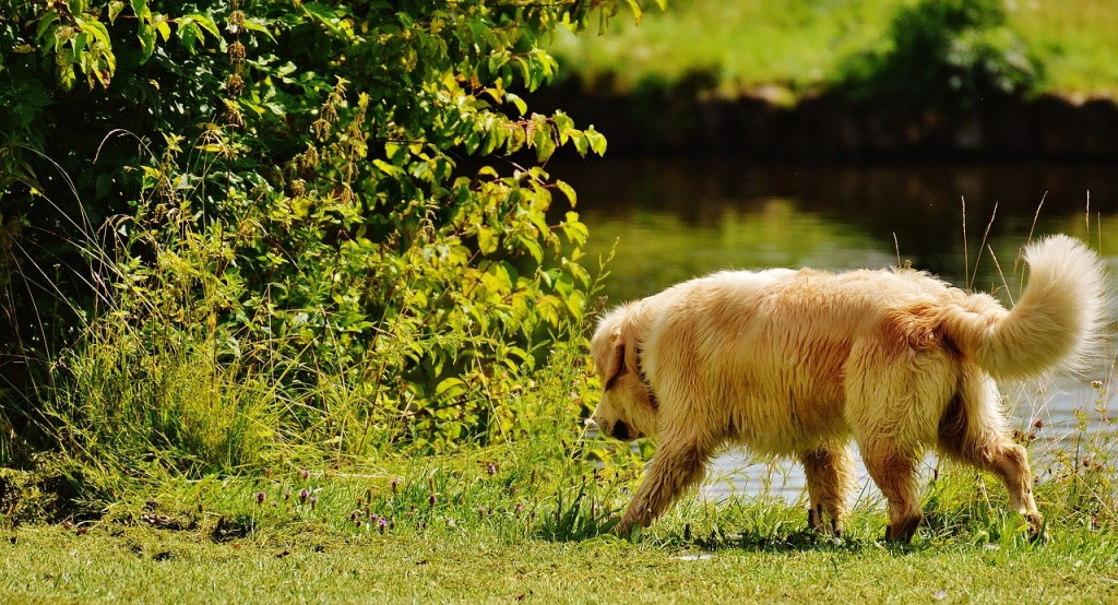 dog-parks-in-austin