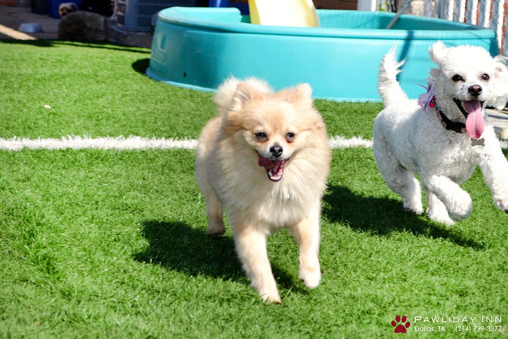 austin-dog-daycare