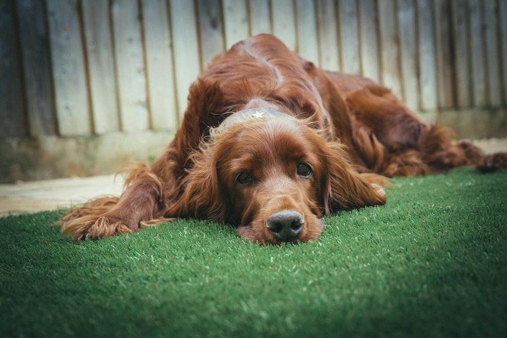 doggy-daycare